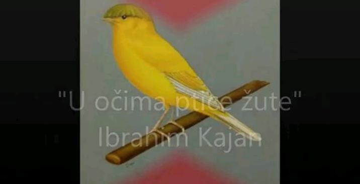 JU Specijalna biblioteka Behram-beg